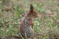 Naljakas orav.jpg