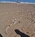 Namibia Skelettküste-Nationalpark Skelett 1.jpg