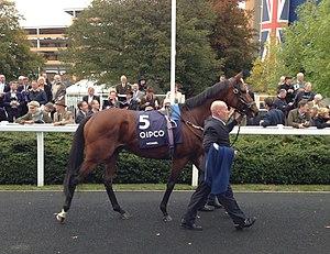 Nathaniel (horse) - Nathaniel at Ascot before the Champion Stakes