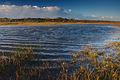 Nationaal Park Zuid-Kennemerland (22).jpg