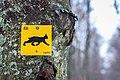 Nationalpark Bayerischer Wald 9.jpg