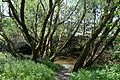 Naturschutzgebiet Mittleres Innerstetal mit Kanstein - Innerste bei Binder (3).JPG