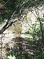 Navidad River in drought, pools but no flow - panoramio.jpg