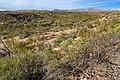 Near Bone Spring Canyon - Flickr - aspidoscelis.jpg