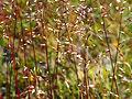 Nendaz grass (6152989046).jpg