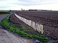 New Hedge Planting - geograph.org.uk - 58063.jpg