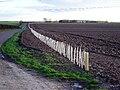 New Hedge Planting - geograph.org.uk - 58063.jpg