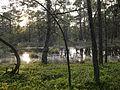 Niedersachsen Otternhagener Moor Sumpfiger Teich JG.jpg