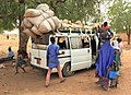 Niger, Margou (16), loading sheep onto a minubus.jpg