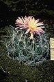 Nightbloomingcactus.jpg