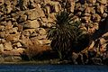 Nile in Aswan3.jpg