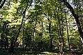 Noironte, le Bois du Breuil.jpg