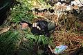 Nordic Battle Group ISTAR Training - Sniper Spotte (5014199365).jpg
