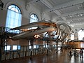 Oceanographic Museum - panoramio (6).jpg