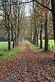 Odenthal - Naturschutzgebiet Dhünnaue 07 ies.jpg