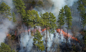 Outline of forestry - A controlled burn at the Okefenokee National Wildlife Refuge in southern Georgia.