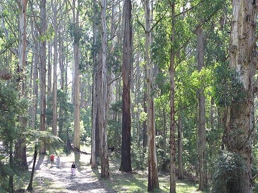 Olinda Forest