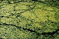 Orsay Parc East Cambridgeshire 2012 08.jpg