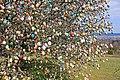 Ostereierbaum, mit 10.000 Eiern geschmückt IMG 9625WI.jpg
