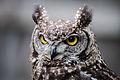 Owls @ Dragonheart, Enschede (9546852025).jpg