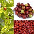 Owoce Jujuba.jpg