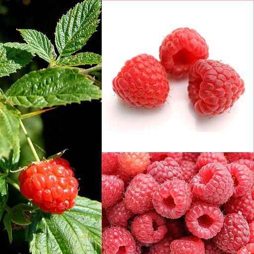Owoce Malina