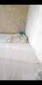 Paint dust inside a Hong Kong apartment for rent.png
