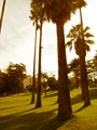 Palm trees in the park (445455667).jpg