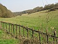 Park Gate Down nature reserve - geograph.org.uk - 383756.jpg