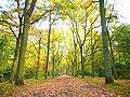 Park views in autumn (Netherlands 2011) (6311404129).jpg