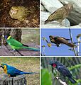 Parrot montage.jpg
