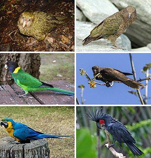 Parrot order of birds