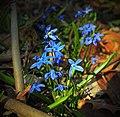 Patch of Blue (8607806085).jpg
