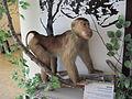 Patung monyet.JPG