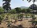 Peony Garden in Iwakuni Chokokan Museum 3.jpg