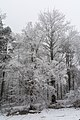 Pernegg Winterlandschaft 20170128 01.jpg