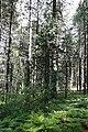 Persephone Nature Trail, Troodos, Cyprus - panoramio (10).jpg