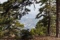 Persephone Nature Trail, Troodos, Cyprus - panoramio (31).jpg