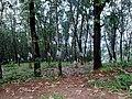 Peruvanmala (Perumala), Kechery Kerala - panoramio (2).jpg