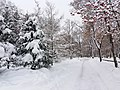 Petrovskyi Park, Poltava (12.01.19) 02.jpg