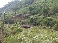 Phước Bình, Bác Ái, Ninh Thuận, Vietnam - panoramio.jpg