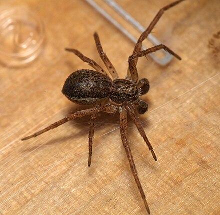 виды пауков фото россия полёты