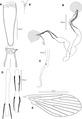 Phlebotomus (Anaphlebotomus) vaomalalae female Figure 2 full plate.tif