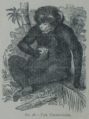Picture Natural History - No 26 - The Chimpanzee.png