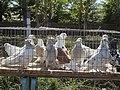 Pigeons - panoramio (2).jpg