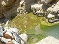 PikiWiki Israel 15816 David Creek water back.jpg