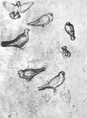 Pisanello, disegni, louvre 2508r