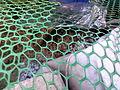 Plant Wall Aquaponics IMG 20150805 172938.jpg