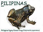 Platymantis pygmaeus 2011 stamp of the Philippines 2.jpg