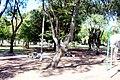 Plaza vista desde Calle Saldanha de Gamma - panoramio.jpg
